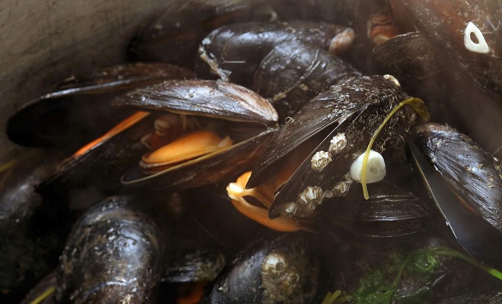 Steamed Irish Mussels