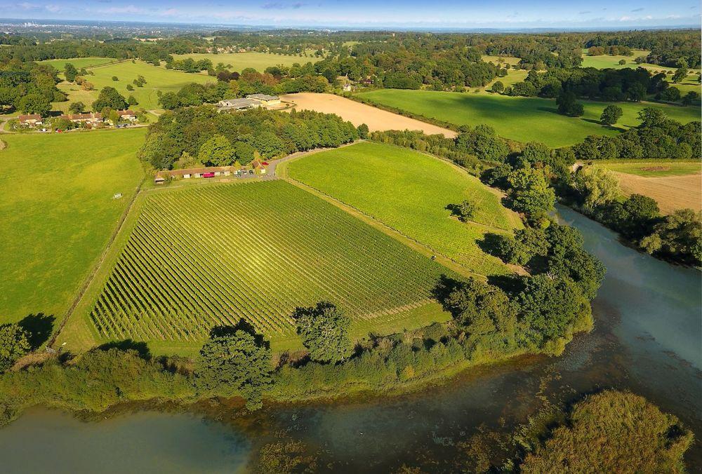 Windsor Great Park Vineyard . Laithwaites