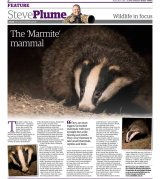Badgers-0903