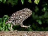 Same Owl but through 90 degrees