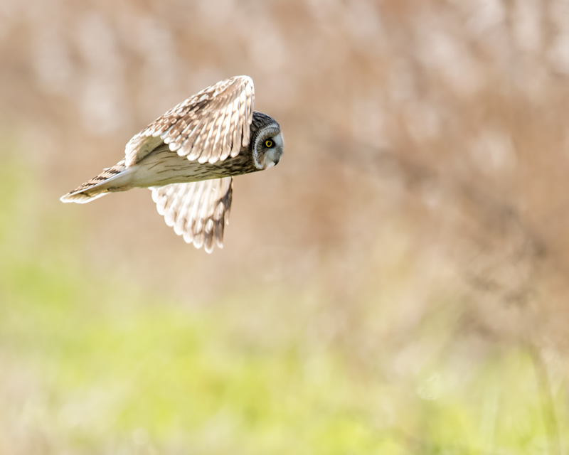 SEO backlit no2