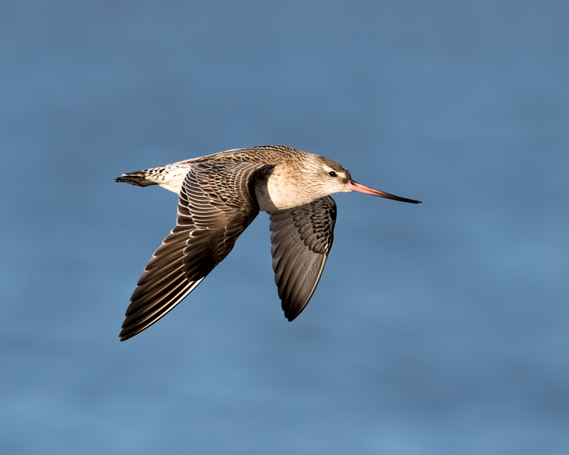 Barwit in Flight