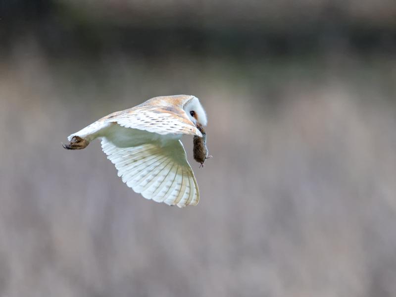 Safely in beak
