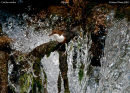 Dipper falls