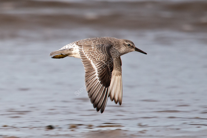 Knot in flight