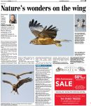 marsh-harriers-EDP.2013-04-27.MAIN.001