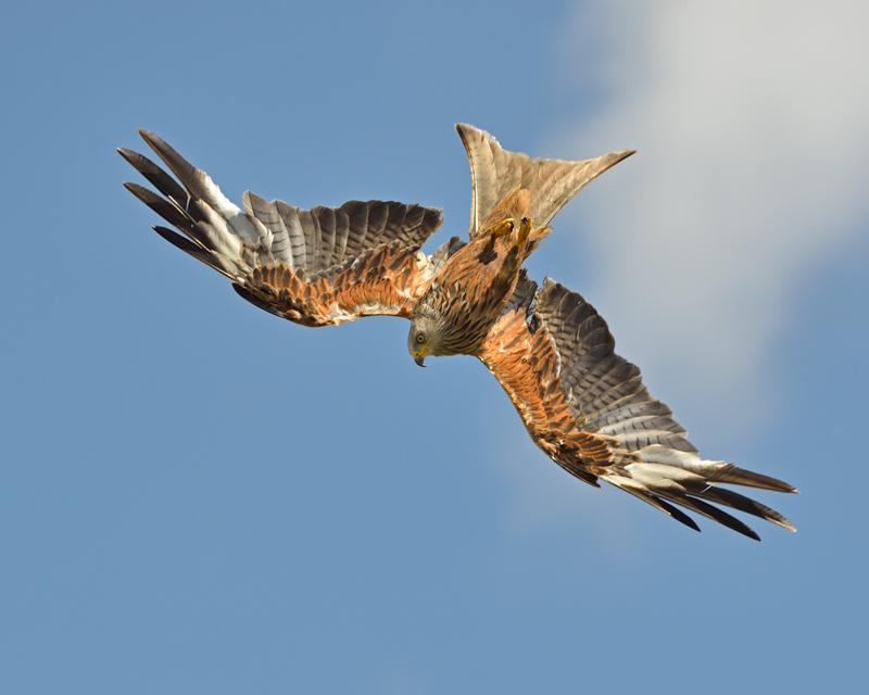 Inverted Kite