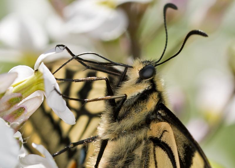 Up close nectarine