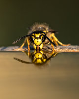 Wasp discovering physics