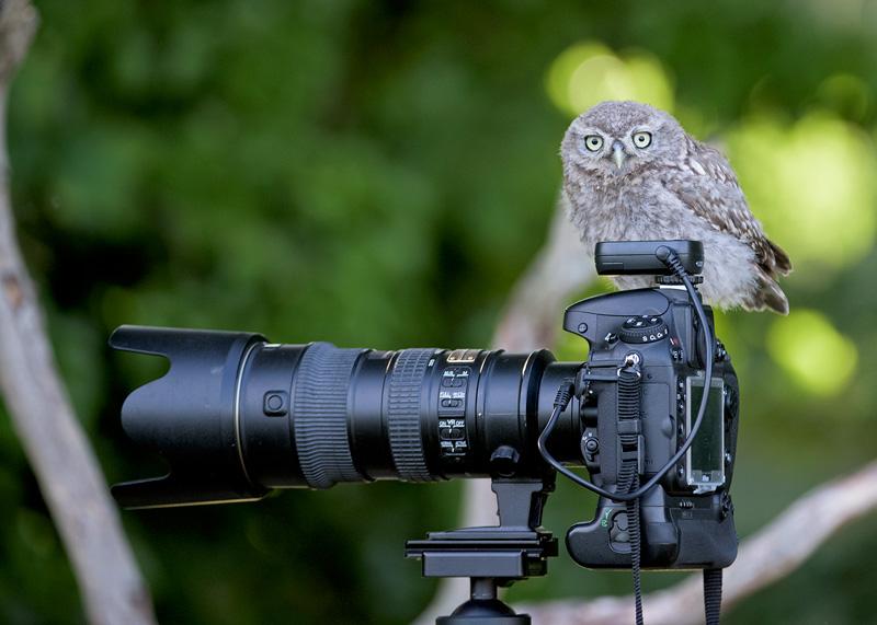"""Pap """"Owl"""" ratzzi"""