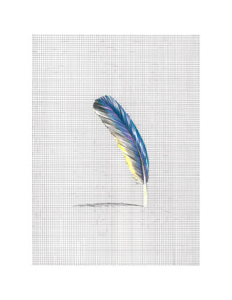 untitled (blue feather)