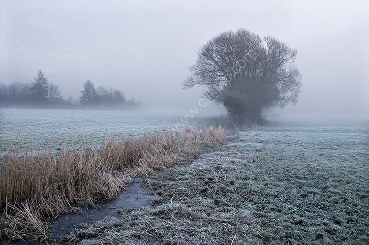 Mist & Frost III