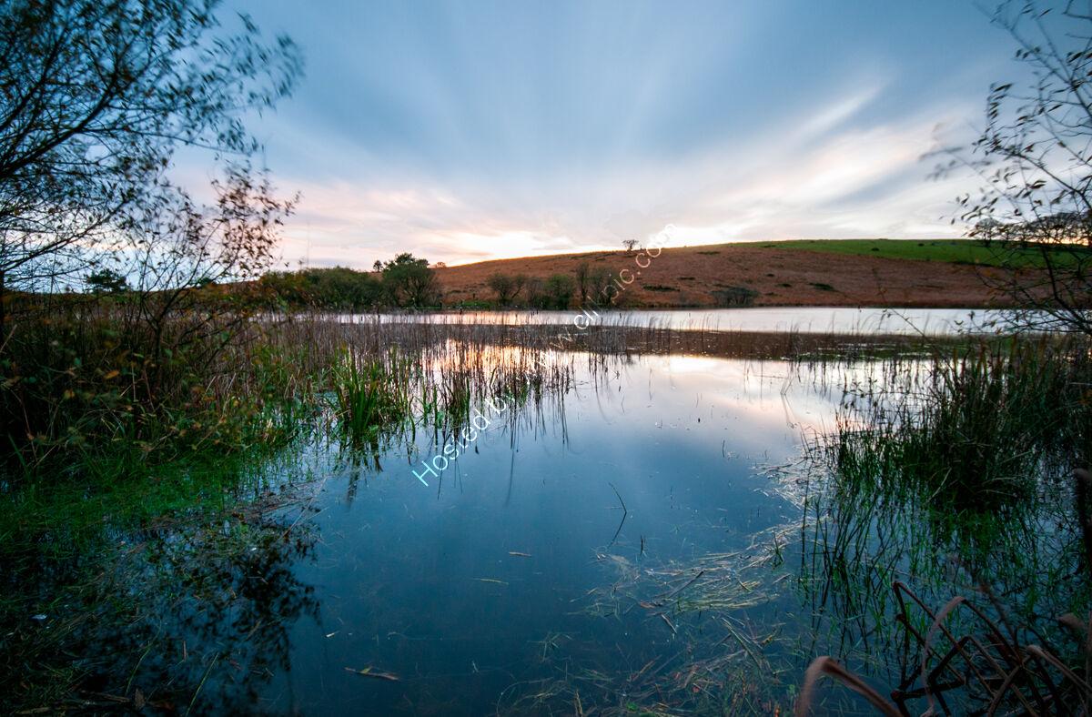 Priddy Pond LE