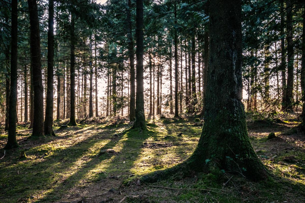 Stockhill Wood No.1