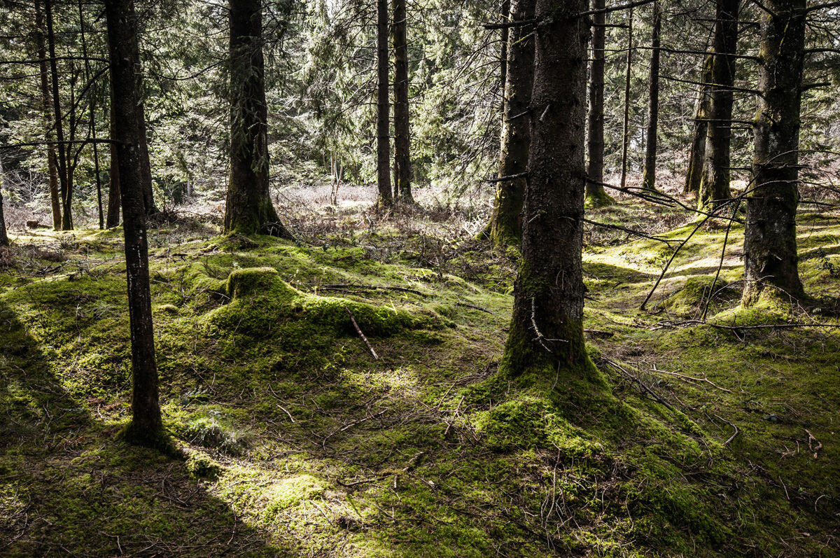 Stockhill Wood No.3