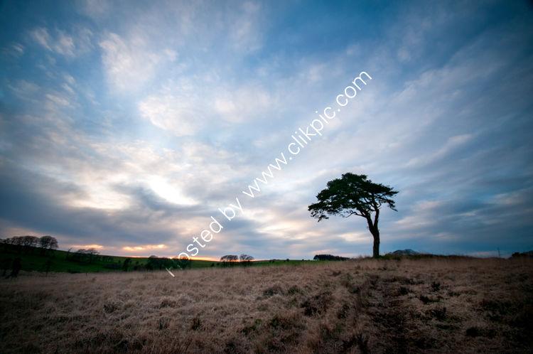 Lone Tree 8