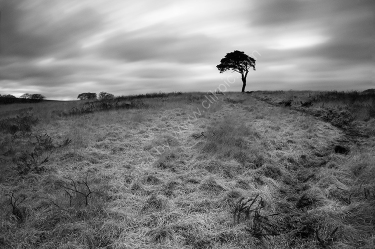 Tree on the Mendips