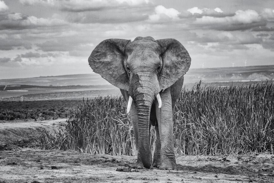 Elephant At The Waterhole