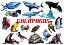 Galapagos - Digital
