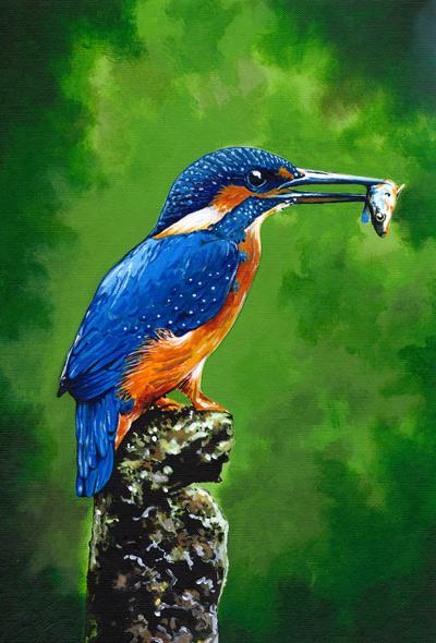 Kingfisher - Acrylic