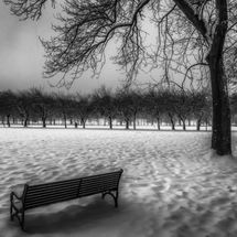 meadows in snow 2