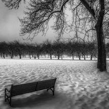 meadows in snow 2