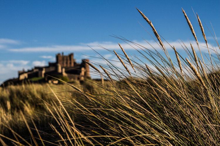 Bamburgh Grasses