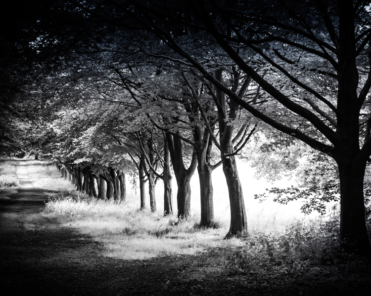 Tree Lined Avenue, Rivington