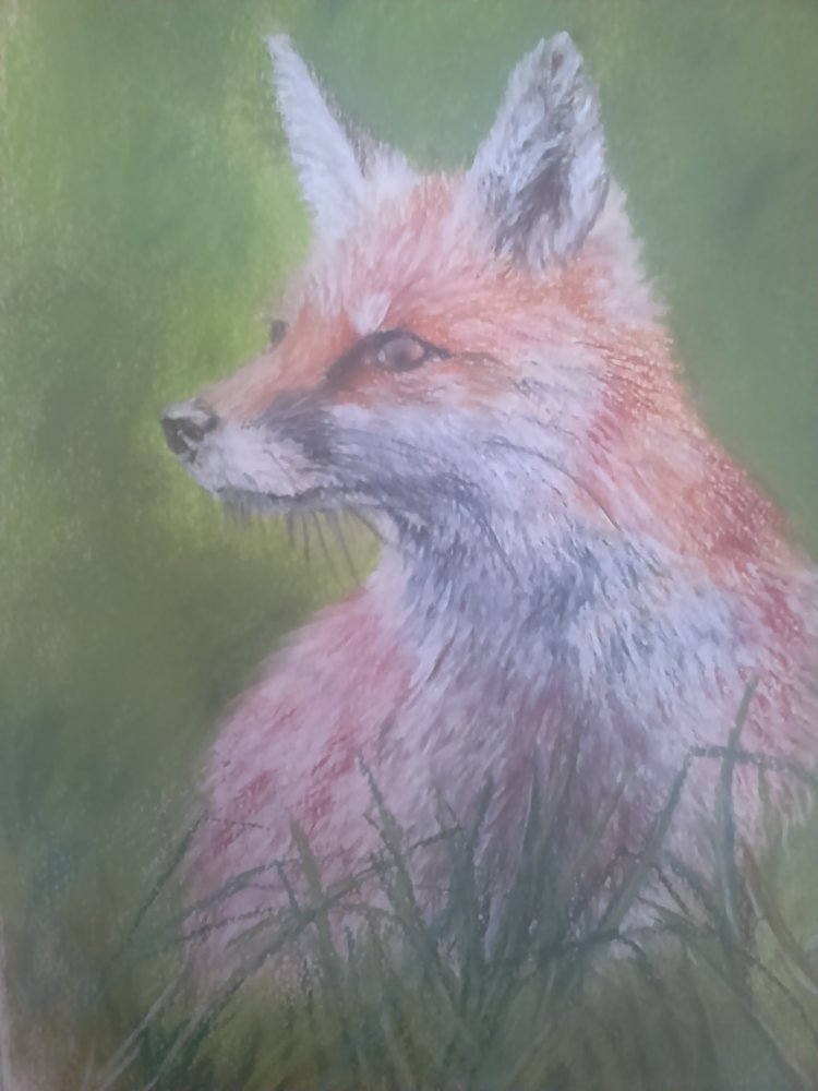 Fox. Pastel work by Carol Eley