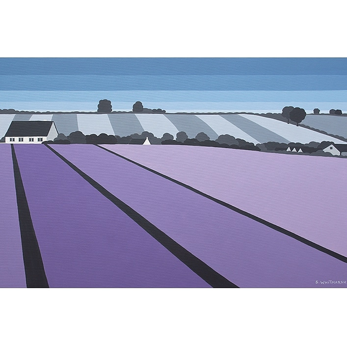 LAVENDER IN THE COTSWOLD