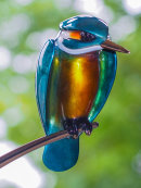 Kingfisher Bronze [ The lazy river ]