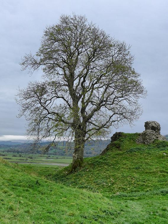 Castle Invader