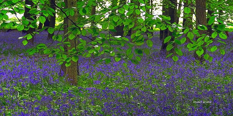 Dockey Wood 01