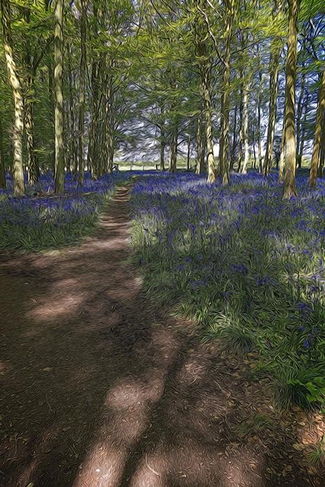 Dockey Wood 03