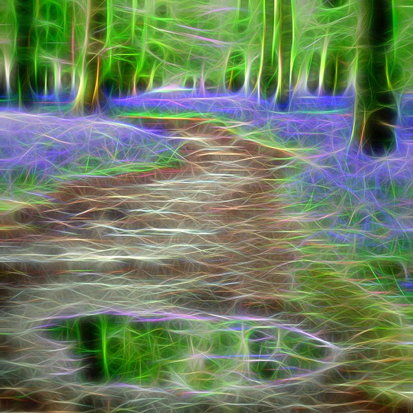 Dockey Wood Dream