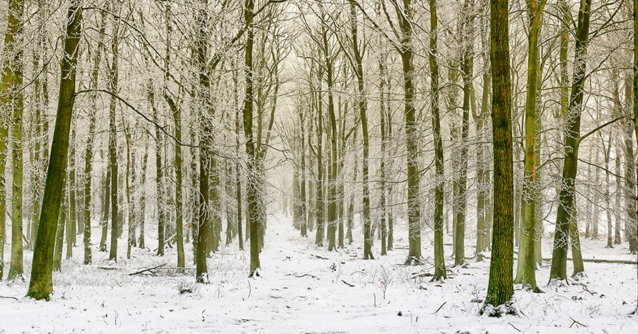 Docky Wood Winter