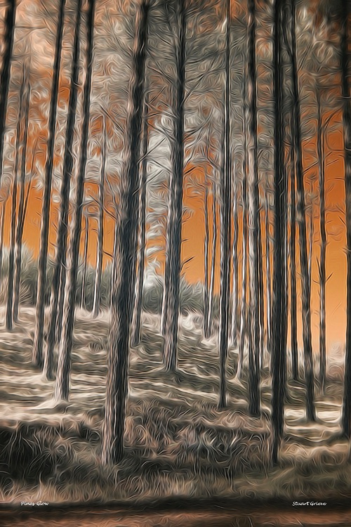 Dune Pines