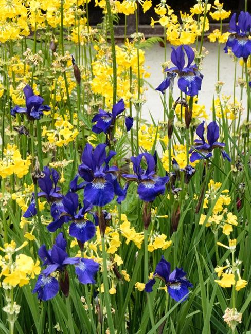 Iris Heligan