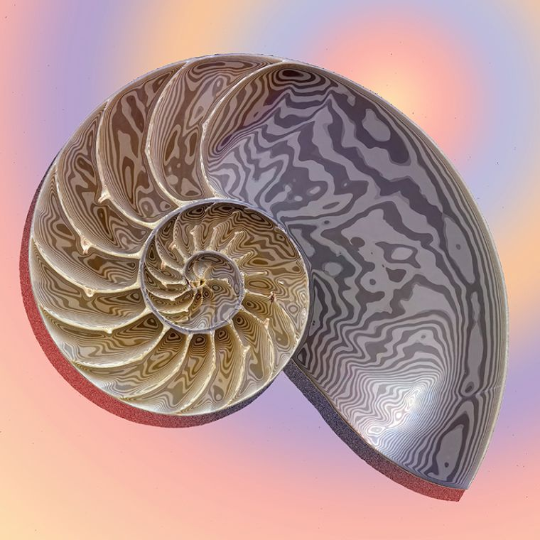 Nautilus Abstract