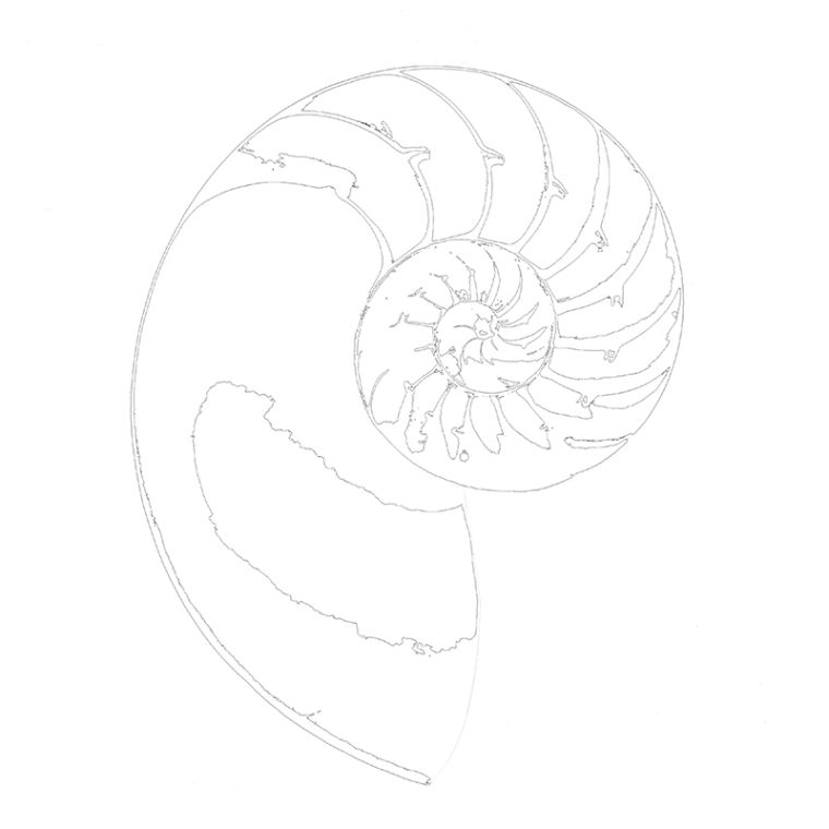 Nautilus Outline