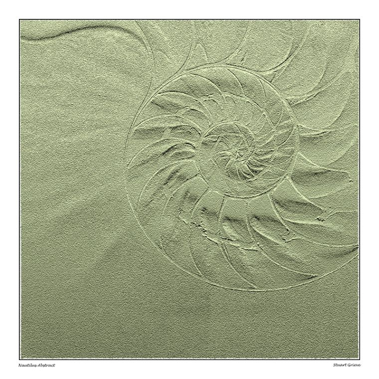 Nautilus Sand Print