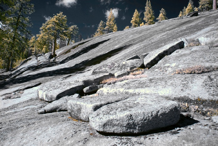 Pines and Granite