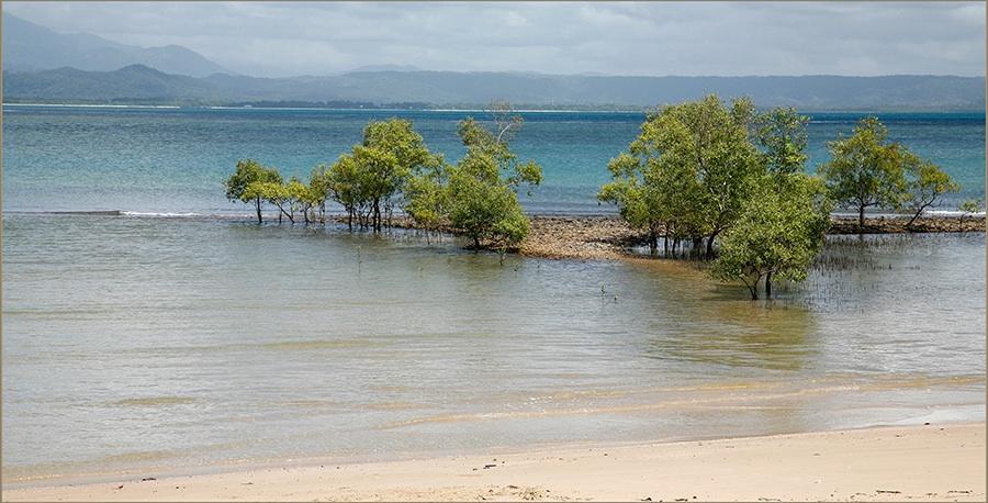 Queensland Mangrove