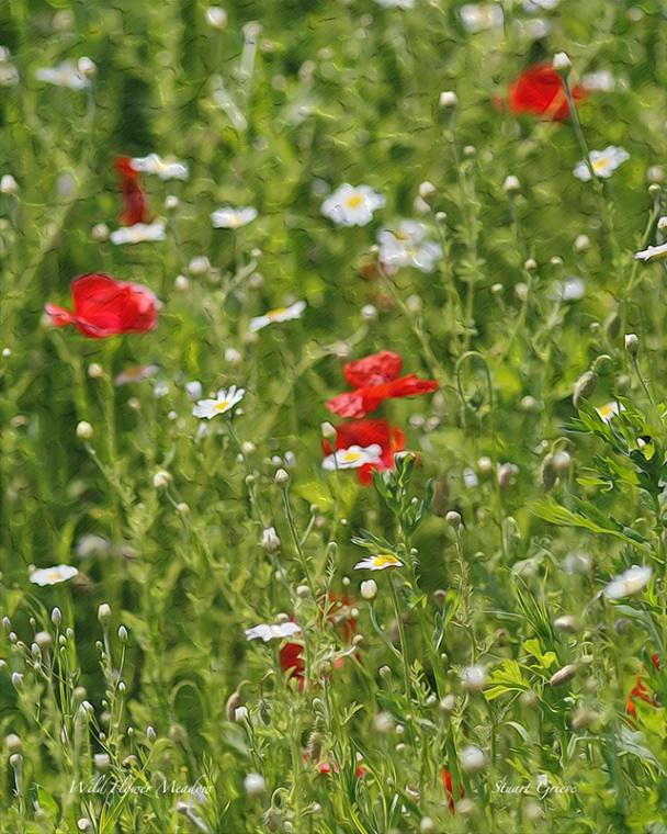 Wild Flower Oil