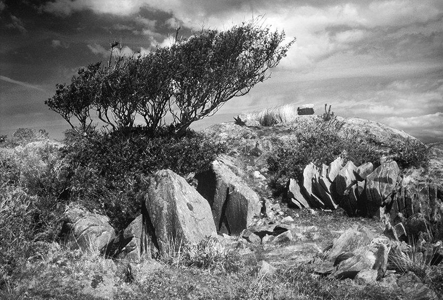 Windblown Snowdonia