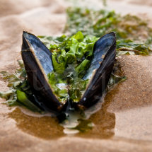 Shell & Seaweed