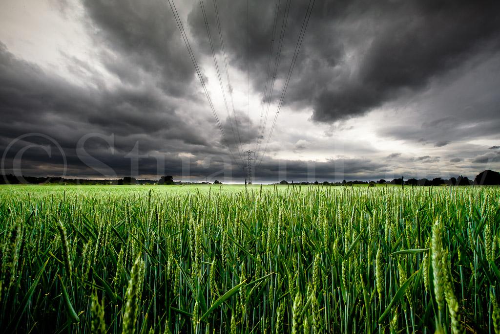 Crops & Lines