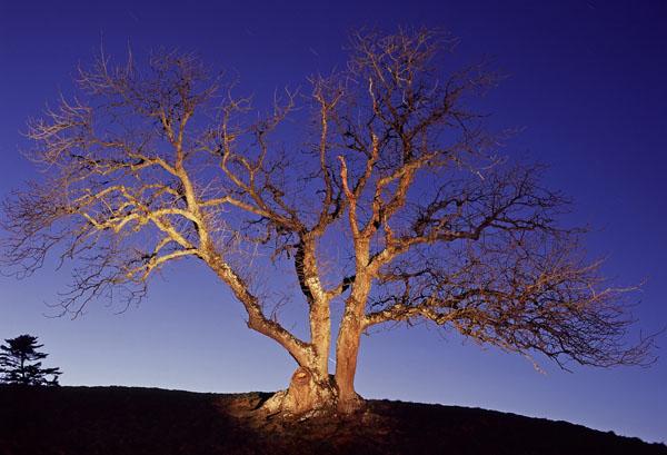 The Lightening Tree - Teesdale
