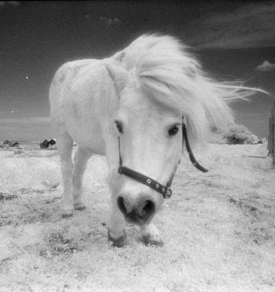 Boldon Horses Uk