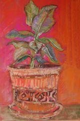 pot plant (NFS)